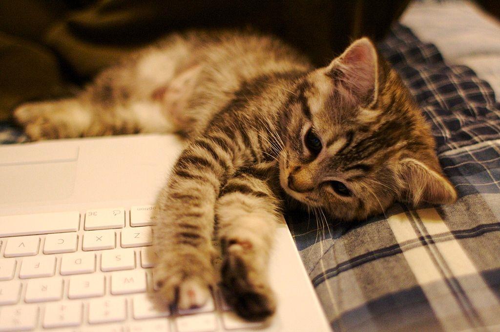 kitten on keyboard awww!